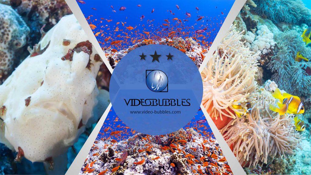 Underwater videos